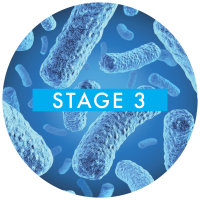 stage-3-bacteria
